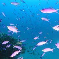 大仏サンゴ