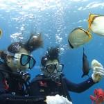 サンゴと熱帯魚に会えるボート体験ダイビング