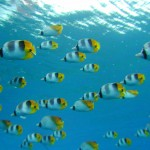 透明度の高い沖縄の海