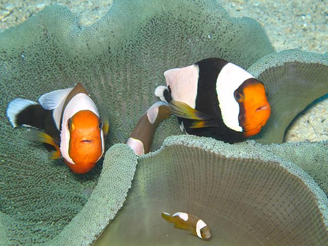 魚の餌付けは環境に問題ないの?