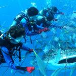 沖縄でジンベイザメに出会える?出会えるスポットは?ライセンスがなくても大丈夫?