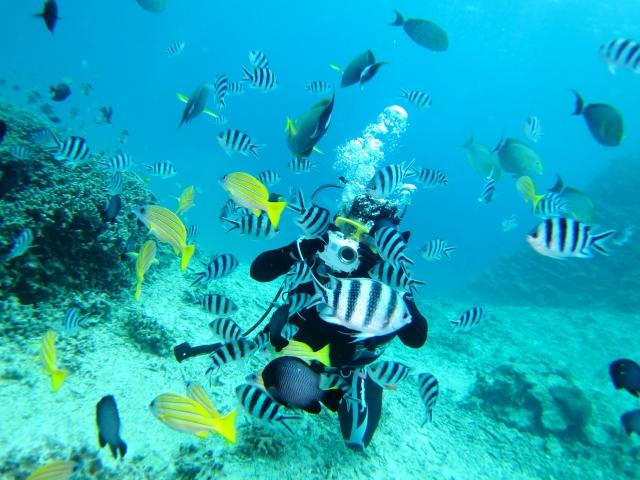 ダイバーと熱帯魚