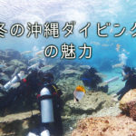 冬の沖縄ダイビング