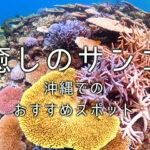 癒しのサンゴ礁スポット