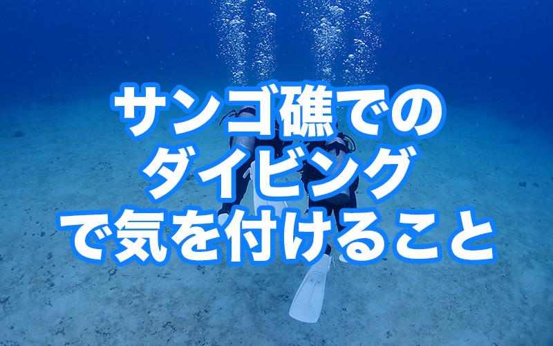 サンゴ礁でのダイビングで注意すること