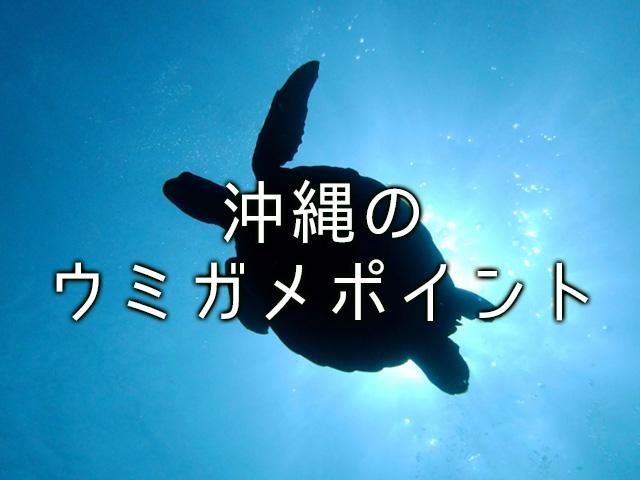 沖縄でウミガメに出会えるポイントは?