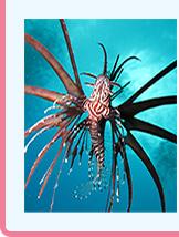 海の生き物写真