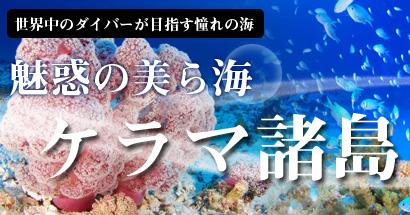 魅惑の美ら海、慶良間諸島でダイビングだ!
