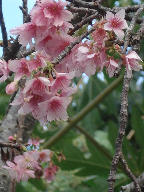 沖縄写真 002.jpg