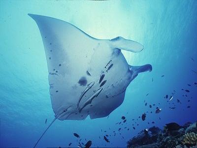 「石垣島 ダイビング」の画像検索結果
